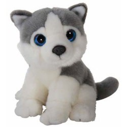 Husky, Wild Watcher