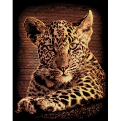 Leopardunge, kobberfarvet kradsfolie/skrabefolie, PPCF25